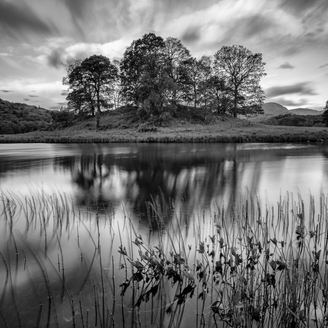 """""""Trees at Elterwater"""" stock image"""