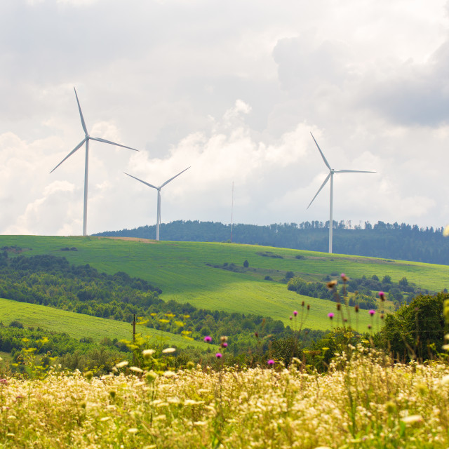 """""""Wind farm eco field on hills with green grass and flowers"""" stock image"""