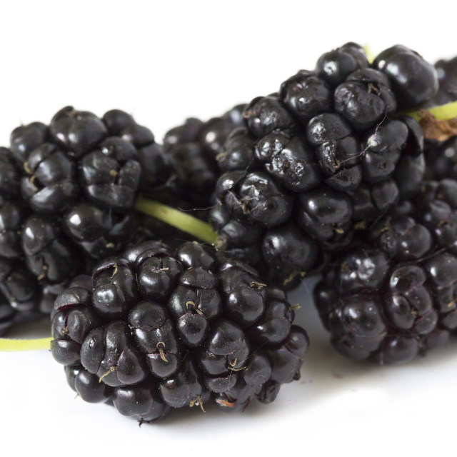 """Mulberry fruits"" stock image"