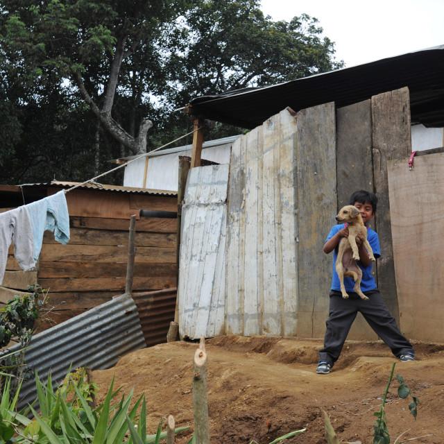 """A boy, dog and poor housing in Aqua Escondida, Solola, Guatemala."" stock image"