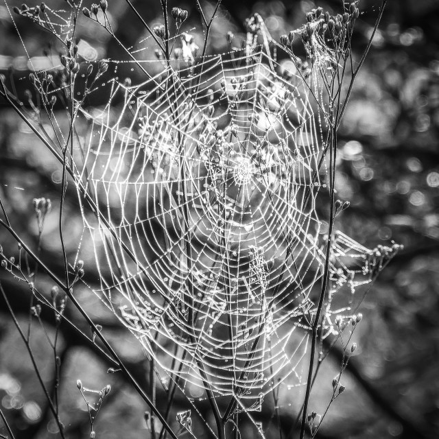 """A spiders web."" stock image"