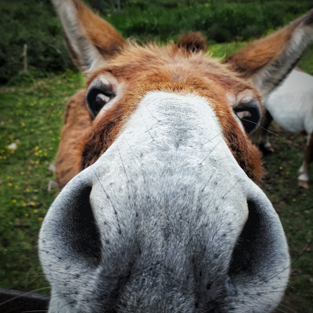"""""""Carrots? Can I've some?"""" stock image"""