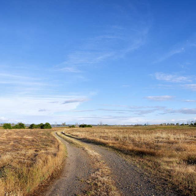"""Panorama of a dirt road passing through a rural field."" stock image"