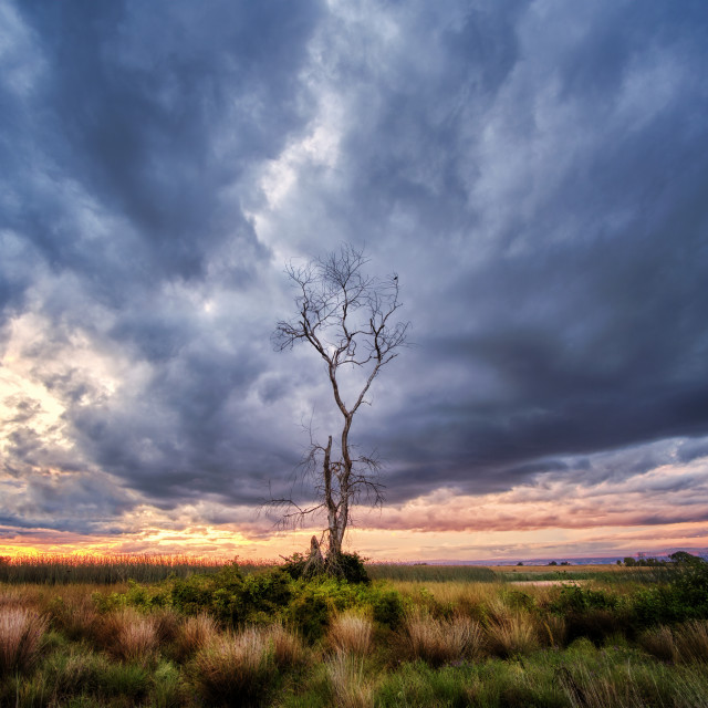 """Inspirational Lone Tree At Sunset"" stock image"