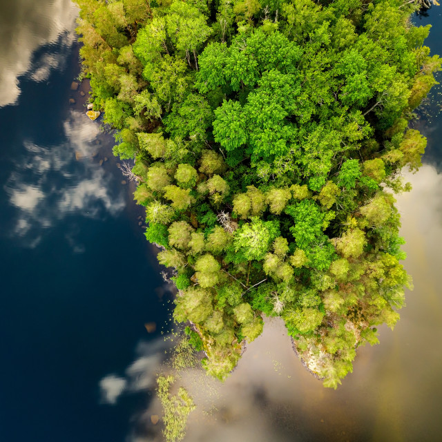 """""""Top down trees and lake"""" stock image"""