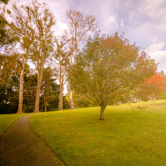 """Autumn in Auckland"" stock image"