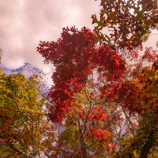 """Autumn scenes from the garden-2"" stock image"