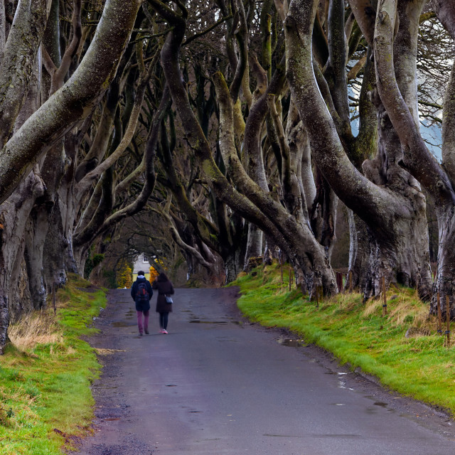 """The Dark Hedges, Northen Ireland, UK"" stock image"