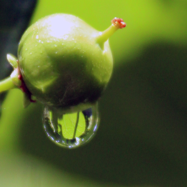 """raindrop on a berry"" stock image"