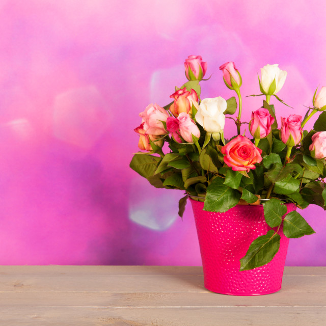 """""""Bouquet colorful roses in vase"""" stock image"""