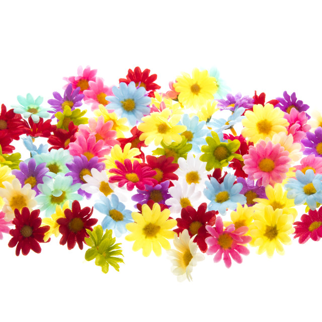 """""""Colorful summer flowers"""" stock image"""