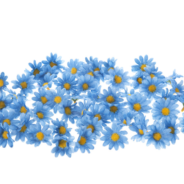 """""""Colorful blue summer flowers"""" stock image"""