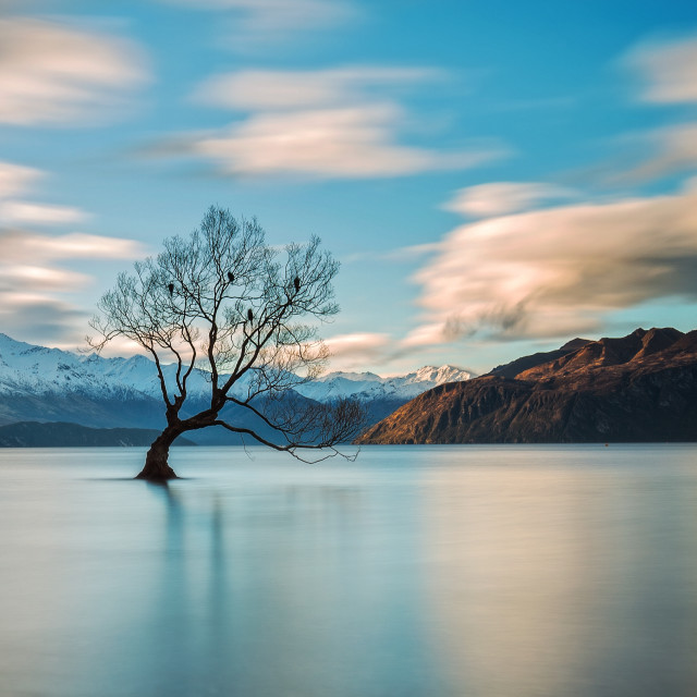 """The Tree at Lake Wanaka, New Zealand"" stock image"
