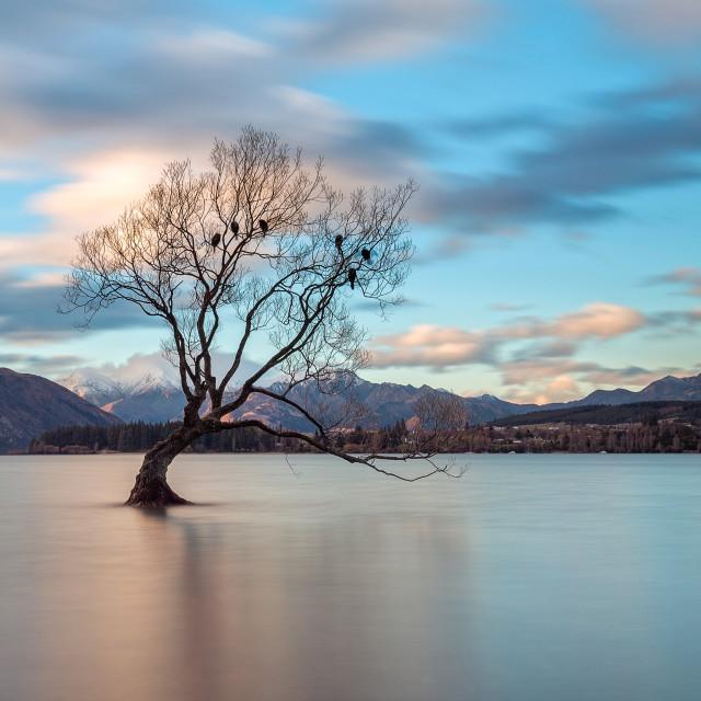 """""""The Tree at Lake Wanaka, New Zealand"""" stock image"""