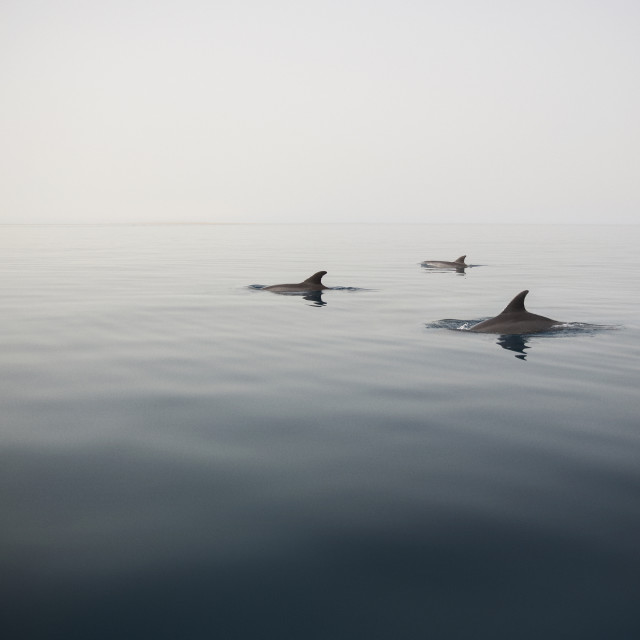 """""""Dolphin swimming in sea against clear sky"""" stock image"""