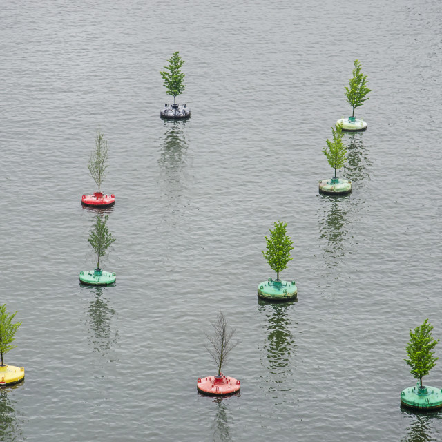 """""""Floating forest in summertime"""" stock image"""