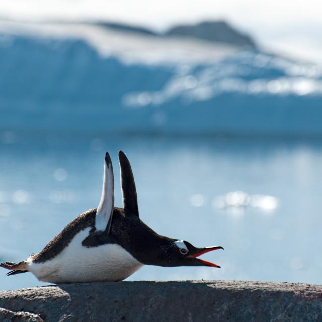 """Penguin Pilates!"" stock image"