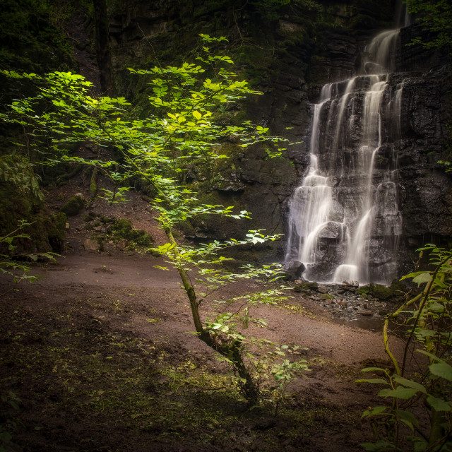 """""""Swallet Sapling - Lone tree in a secluded spot by a waterfall"""" stock image"""