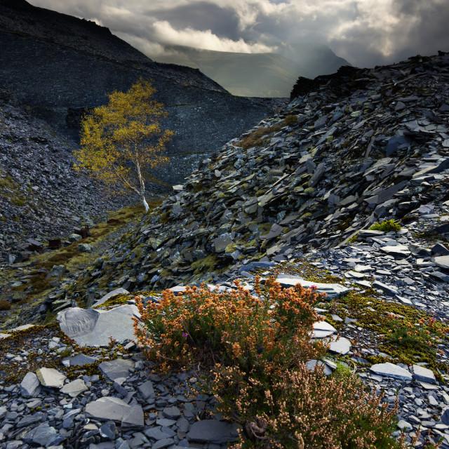 """New life, Dinorwig slate quarry"" stock image"