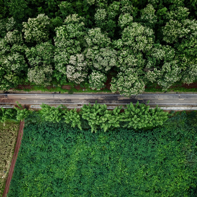"""An aerial view of a rural road surrounded by greenery area and forest trees"" stock image"