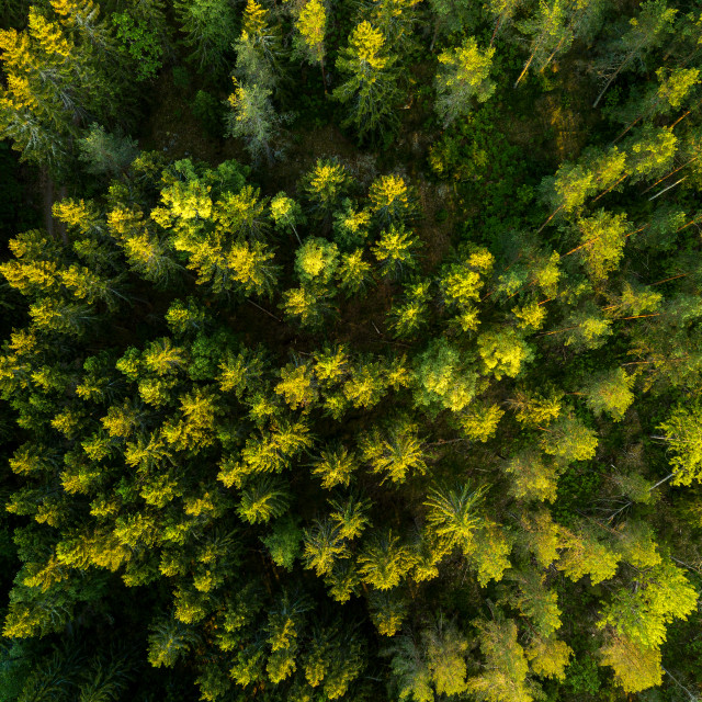 """""""Top down trees"""" stock image"""