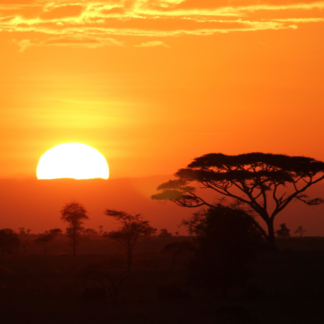 """""""Serengeti Sunrise"""" stock image"""