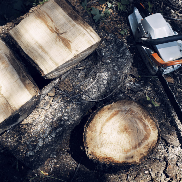 """""""Overhead view of logs and chainsaw on field"""" stock image"""