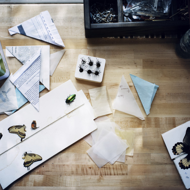 """""""Overhead view of artificial insects and papers on wooden table"""" stock image"""