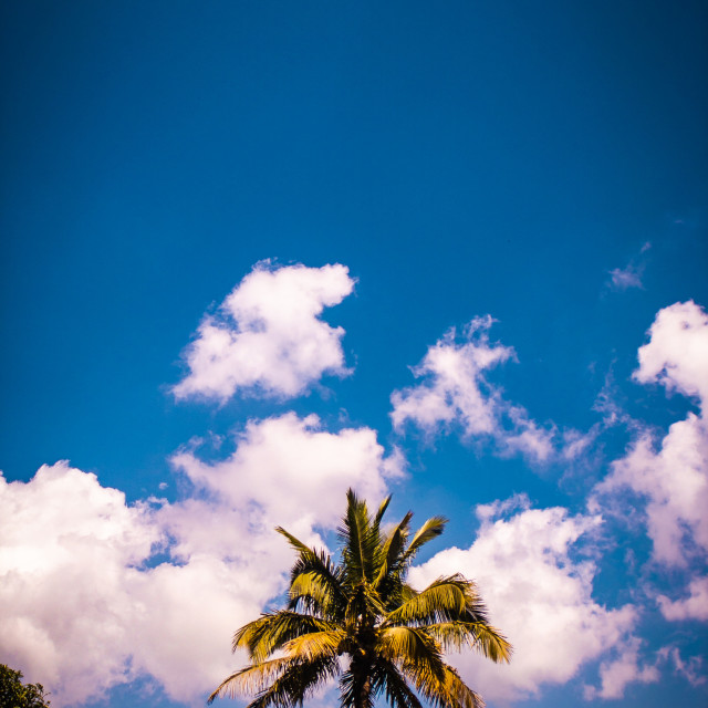 """Coconut in the clouds"" stock image"