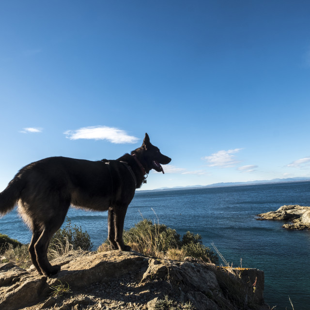 """""""Side view of dog standing on rocks at beach against sea and sky"""" stock image"""