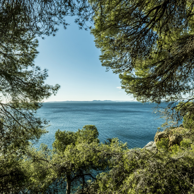 """""""Scenic view of sea seen through branches"""" stock image"""