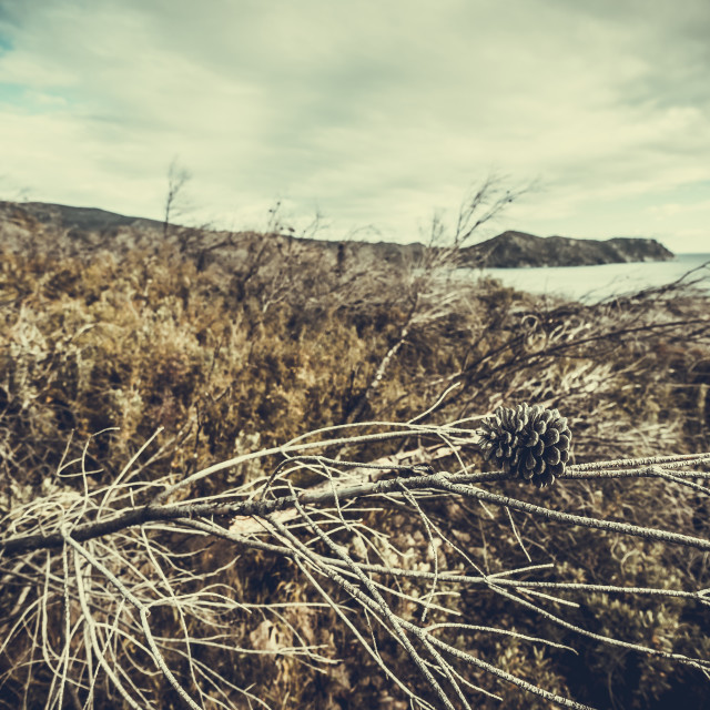 """""""Close-up of dried plants at beach against cloudy sky"""" stock image"""