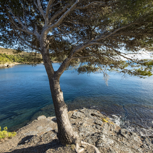"""""""Tree growing on shore by sea"""" stock image"""