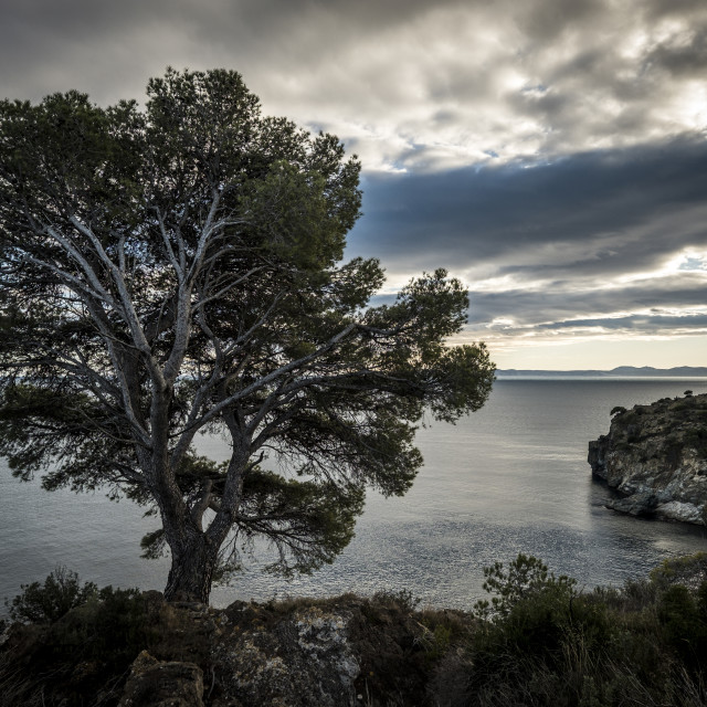 """""""Tree growing on shore by sea against cloudy sky"""" stock image"""