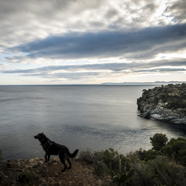 """""""High angle view of dog standing at beach against cloudy sky"""" stock image"""