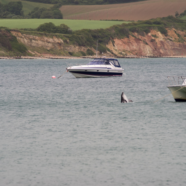 """""""Dolphin in Swanage Bay"""" stock image"""