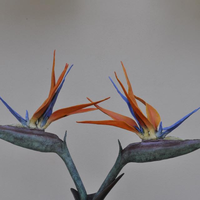 """""""Up close Bird of Paradise"""" stock image"""
