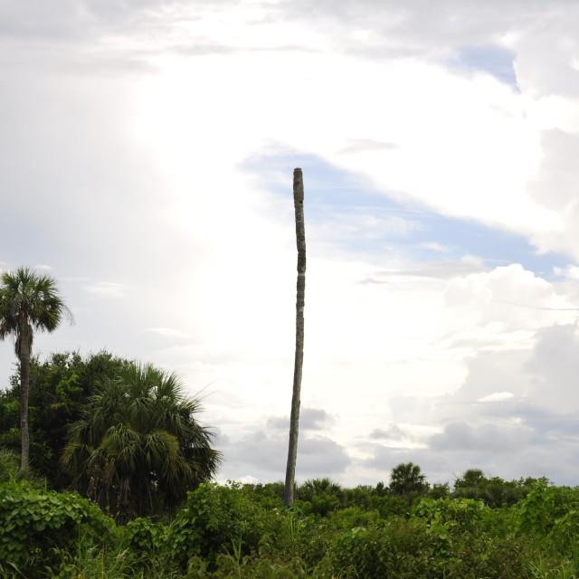 """Bye Bye Palm Tree"" stock image"