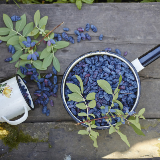 """""""Overhead view of berry fruits in saucepan by cup with leaves on wooden table"""" stock image"""