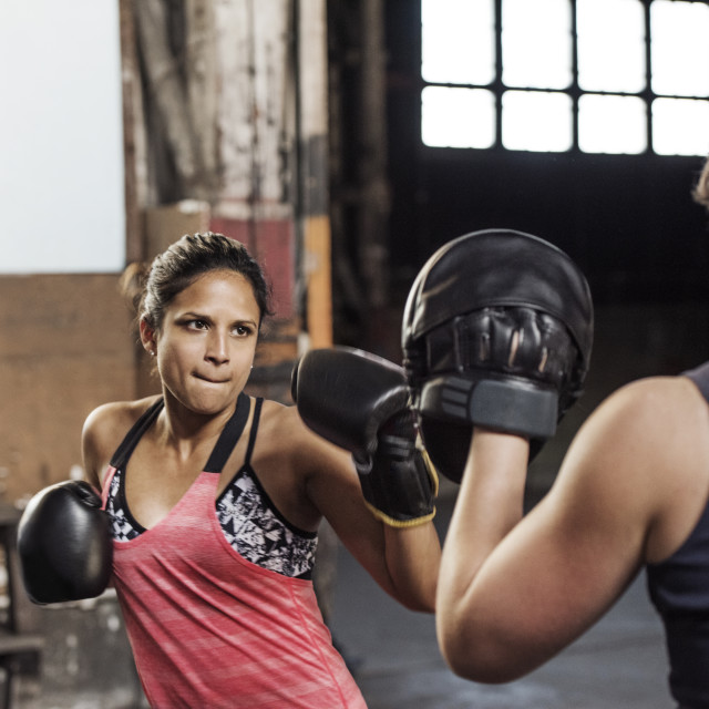 """Determined female boxers practicing in health club"" stock image"