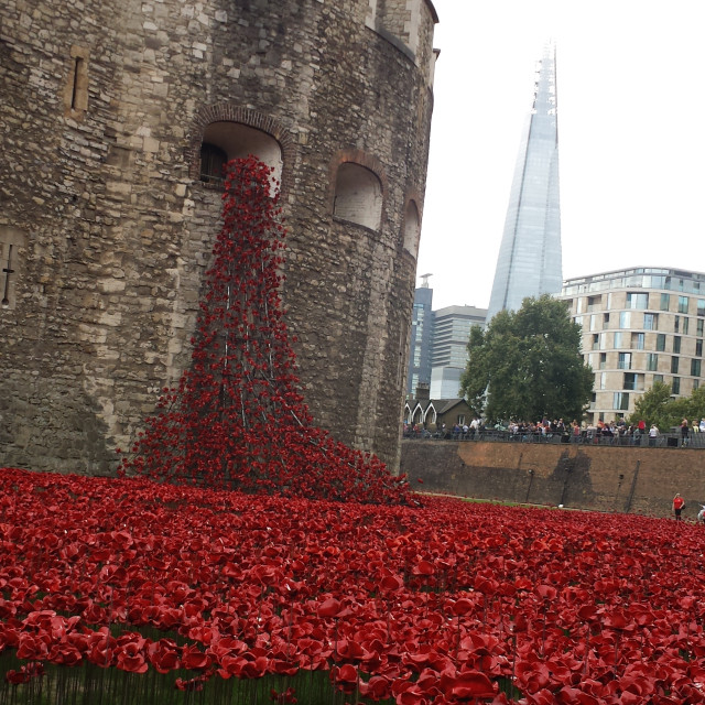 """""""""""Weeping Window"""" Poppies at the Tower of London."""" stock image"""
