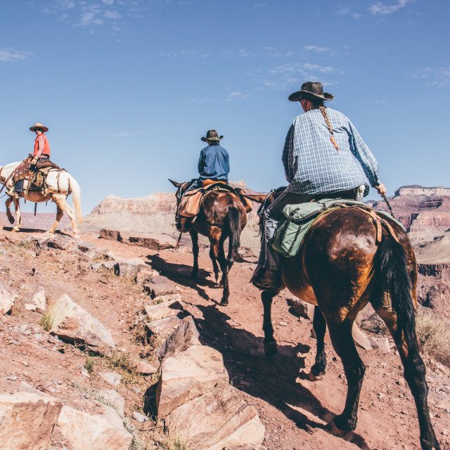 """""""Horse Riding in the Grand Canyon"""" stock image"""