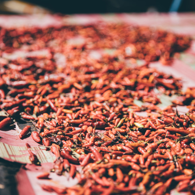 """Dried Chillies"" stock image"