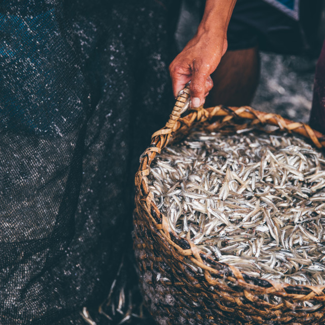 """Basket of Fish"" stock image"