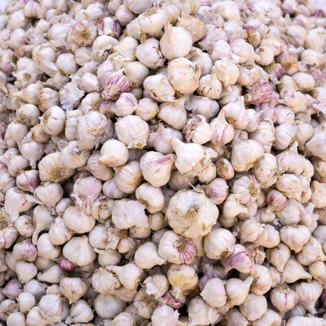 """Heaps of garlics"" stock image"