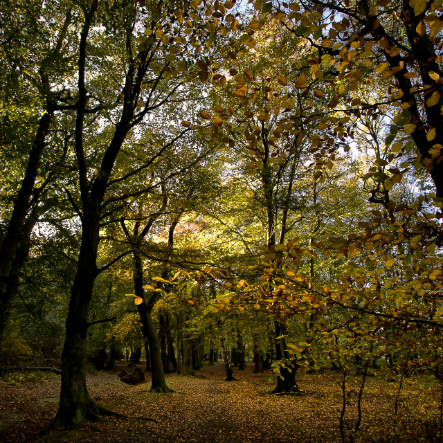 """Autumn Woodland Colours"" stock image"