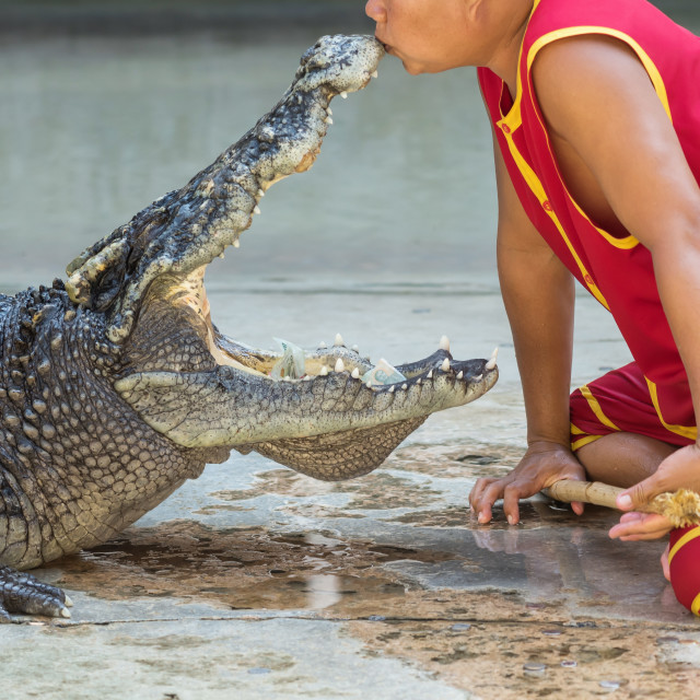 """""""show kissing mouse of crocodile, Thailand"""" stock image"""