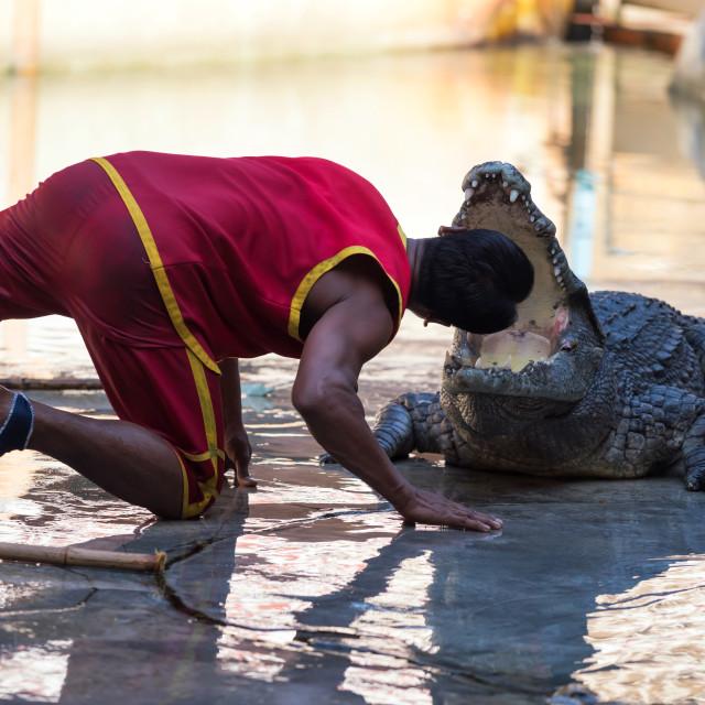 """""""trainer put his head to crocodile"""" stock image"""