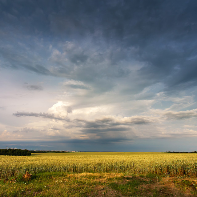 """""""Storm dark clouds over field. Thunderstorm over a wheat field."""" stock image"""