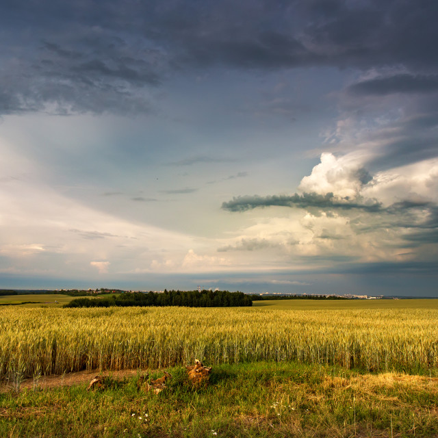 """""""Storm dark clouds over field. Thunderstorm over a wheat field"""" stock image"""